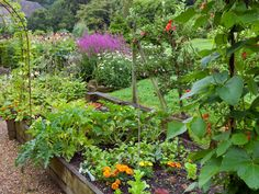 This vegetable garden uses raised beds and trellises to grow a variety of plants. Some of the crops include beans, herbs, and squash.