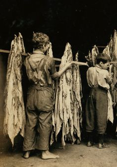 Boys working in a tobacco drying shed - 1914.