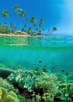 Amazing- Indonesia -Wakatobi Diving Resort- Indonesia