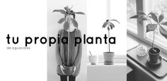 En el post de hoy te explicamos cómo plantar tus propios aguacates, desde el…