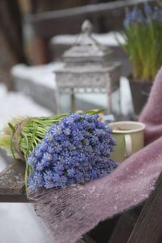 Sett ut lykter og legg ut pledd og puter for å skape en hyggelig uteplass. Wild Strawberries, Welcome Spring, New Growth, Cottage, Spring Flowers, Color Inspiration, Mother Nature, Table Decorations, Green