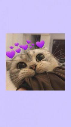 Iphone Wallpaper Cat, Cute Emoji Wallpaper, Bear Wallpaper, Cute Patterns Wallpaper, Cute Disney Wallpaper, Cute Wallpaper Backgrounds, Animal Wallpaper, Cute Cartoon Wallpapers, Cute Baby Cats