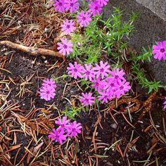 Toutes petites toutes jolies Le Jolie, Plants, Flora, Plant, Planting