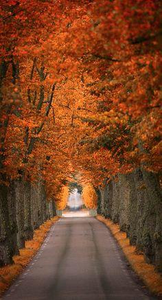 beautiful trees...