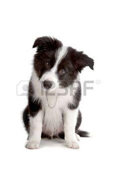 pinterest cuccioli di cane - Cerca con Google