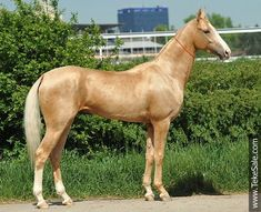 palomino for sale - Google Search