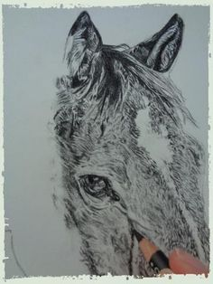 Custom charcoal portrait of Danny the horse. Pet Portrait - Start to Finish