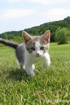 Hey guys I know it's my second day of Pinterest but I couldn't do things today because of classes and work so here's a picture of a kitty PLEASE FORGIVE ME I'll Pin more things tomorrow.