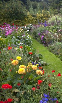 How to create a herbaceous border on a budget - the best gardening tips to create a herbaceous perennial border with garden design tricks and ideas