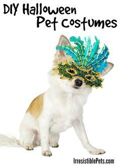 DIY Halloween Pet Costumes by IrresistiblePets.com