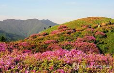 Jirisan, Korea!