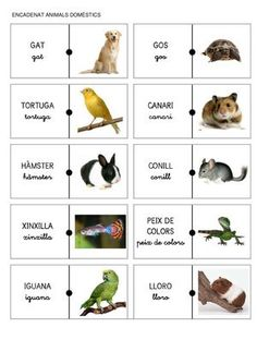 Title: ENCADENAT ANMALS DOMÈSTICS I NOMS, Author: Gemma Majoral, Length: 6 pages, Published: Catalan Language, Sistema Solar, Educational Games, Valencia, Conte, Animal Pictures, Pugs, School, Nature