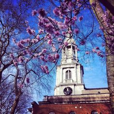 """'Hipster cherry blossoms' in east London, courtesy of JaseinLondon. """"First of Spring in Shoreditch church yard. I think they are real, that said being Shoreditch they could have been hand grown from artisan seeds in a hemp green house by a local and individually glued onto the tree."""" Photograph: JaseinLondon"""