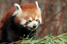 Hmmm...bamboo! by Rainer Leiss, via 500px