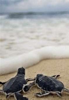 ☮✿★ Baby Turtles ✝☯★☮
