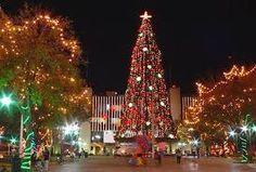 Árboles de Navidad #GermanLeonardoVargasBeltran #GermanVargasBeltran