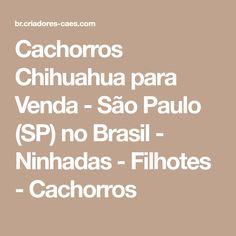 Cachorros Chihuahua para Venda - São Paulo (SP) no Brasil - Ninhadas - Filhotes - Cachorros