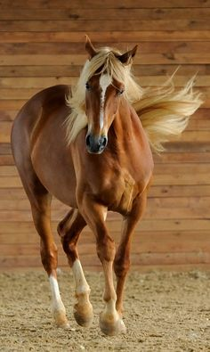 Gorgeous Palomino; takes my breath away!