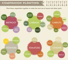 Vegetable Garden Cheat Sheet