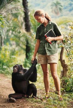 A chimp clasps hands with zoologist Jane Goodall. Dr. Goodall and the Jane Goodall Institute do not endorse handling or interfering with wild chimpanzees. 1965 © Photo by Hugo van Lawick / National Geographic http://www.loeildelaphotographie.com/2014/04/22/exhibition/24736/national-geographic-1892-2000?utm_campaign=website&utm_source=sendgrid.com&utm_medium=email