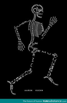 Skeleton Typogram, A Human Skeleton Illustration Made Using The Words For Each Bone. Nursing school just got a little easier Med Student, Anatomy Bones, Human Anatomy, Anatomy Art, Yoga Anatomy, Gross Anatomy, Anatomy Study, Anatomy Reference, Human Skeleton