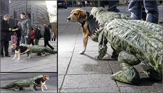 Crocodile eats dog. What a great idea for a costume. Love, love, love it.