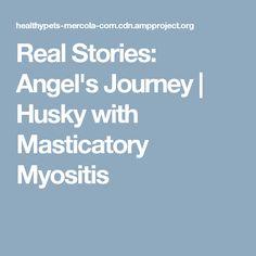 Real Stories: Angel's Journey | Husky with Masticatory Myositis