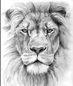 Easy Pencil Drawings Of Lions Lion pencil drawing - patty Leo Tattoos, Body Art Tattoos, Lion Head Tattoos, Lion Tattoo On Thigh, Lion Shoulder Tattoo, Animal Drawings, Art Drawings, Drawings Of Eagles, Pencil Drawings Of Nature