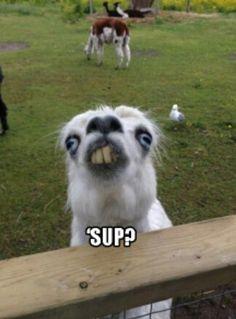 'Sup?