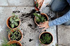 Step By Step: Moving Your Plants Indoors For Winter