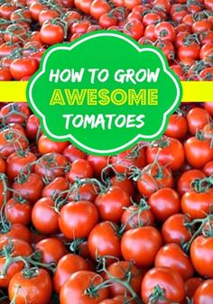 How To Grow Awesome Tomatoes - Moms Need To Know ™