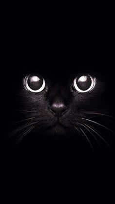 Black Cat 720 x 1280 Wallpapers disponible para su descarga gratuita.