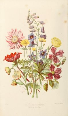 Various flowers, including delphinium, clematis ~ Illustrations of the natural orders of plants with groups and descriptions, 1868.