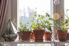 Oravanpesä: HEIPPA 2020. Planter Pots, Instagram