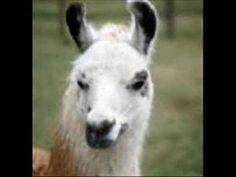 Winamp whips llama