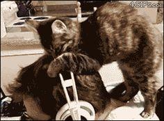 Hey, look! Now I've got my thinking cat on! :)    #cat #cats #gif #gifanimation #funny #funnygifs #kittythursday