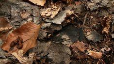 Äta löv och bajsa jord : Hur blir det jord?