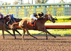 With jockey Kent Desormeaux aboard for the first time, Finest City rallied furiously past her competitors in the stretch to win by 1 1/4 lengths ahead of 1-2 favorite and defending Great Lady M. winner Fantastic Style. 4/23/16