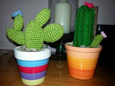Mas cactus