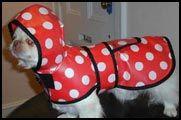 Every dog needs a raincoat