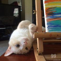 """Kitty Photo From @turbo_cat: """"But Moooooommy I want to play!"""""""