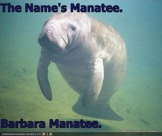 only people who have seen veggie tales will get this. Oh Barbra manateeeee your the only one for meeeeee