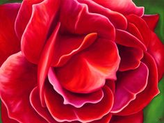 Rose Petals Limited Edition Giclee by AnnaKeayFineArt on Etsy
