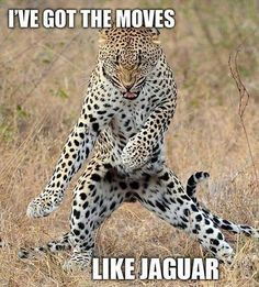 Got those moves like jaguar:  this made my night