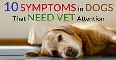 There are certain dog symptoms you should never ignore, because a wait-and-see approach is just not worth the risk. http://healthypets.mercola.com/sites/healthypets/archive/2015/06/17/10-do-not-ignore-dog-symptoms.aspx