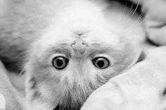 kitty addiction