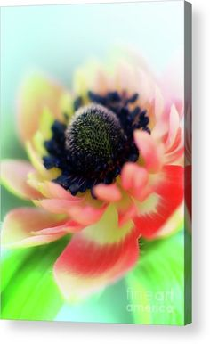 Soft and gentle Acrylic Print by Camelia C. All acrylic prints are professionally printed, packaged, and shipped within 3 - 4 business days and delivered ready-to-hang on your wall. Choose from multiple sizes and mounting options. Expressive Art, Acrylic Sheets, Soft And Gentle, Got Print, Stretched Canvas Prints, Great Artists, Clear Acrylic, Fine Art America, Canvas Art