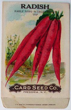vintage seed packet - radish