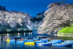 Boating under cherry blossoms is really a pleasant way of enjoying spring time. However, the rowing will be stopped if wind speed is over 6 meters. And I was lucky of shooting cherry blossoms with lines of boats. 千鳥之淵的船,櫻花季時的夜間還是有開放,如果風速超過6公尺,為了安全起見,就會暫停,其實我很希望船不要開放,讓我拍船停泊的畫面,這天的藍色色溫時刻,讓我如願了! 〜千鳥ヶ淵, 東京都, 日本 Chidorigafuchi, Tokyo, Japan - ISO 400, F10, 1.6 sec, 100 mm - Canon 5D MarkIII with EF 100mm f/2.8 Macro L lens - Sunset @ 6.01om (276º) / Shot @ 6.23pm - Visibility 15km @ 6.00pm…