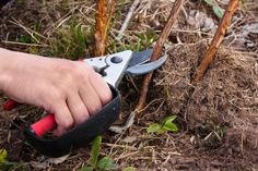 Summer House Garden, Home And Garden, Pruning Shears, Garden Tools, Blog, Flowers, Lawn And Garden, Gardening Scissors, Yard Tools